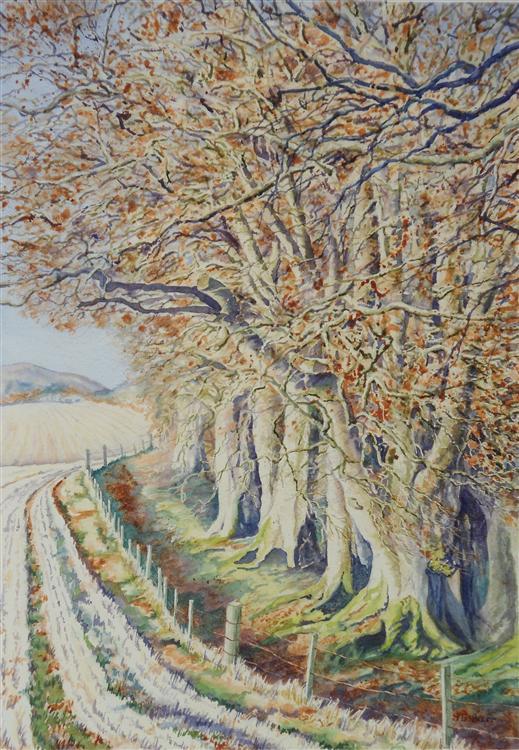 """""""Autumn Beeches near Pearsie"""", watercolour, 56x45cm framed"""