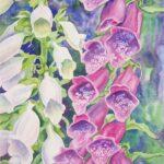 """""""Foxgloves"""", watercolour, 54x39cm framed"""