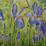 """Irises"", watercolour, 42x50cm framed"