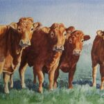 """Limousin Lineup"", watercolour, 38x46cm framed"